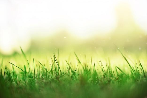 Herbe de printemps verte fraîche avec effet de fuites de soleil. fond de nature abstraite. bannière Photo Premium