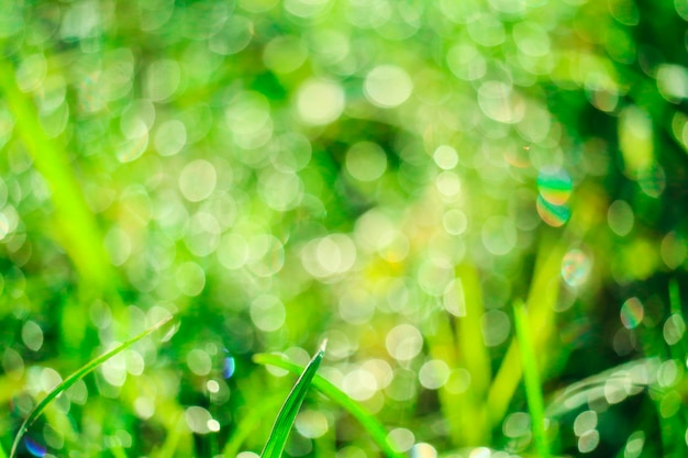 Herbe verte dans le jardin et le flou de la goutte d'eau sur les feuilles en saison des pluies Photo Premium