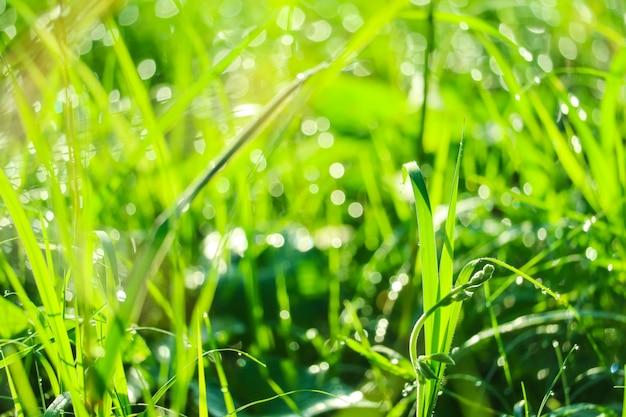 Herbe verte dans le jardin et le flou de la goutte d'eau sur les feuilles Photo Premium