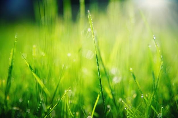 L'herbe Verte Avec Des Gouttelettes D'eau Gros Plan Photo gratuit