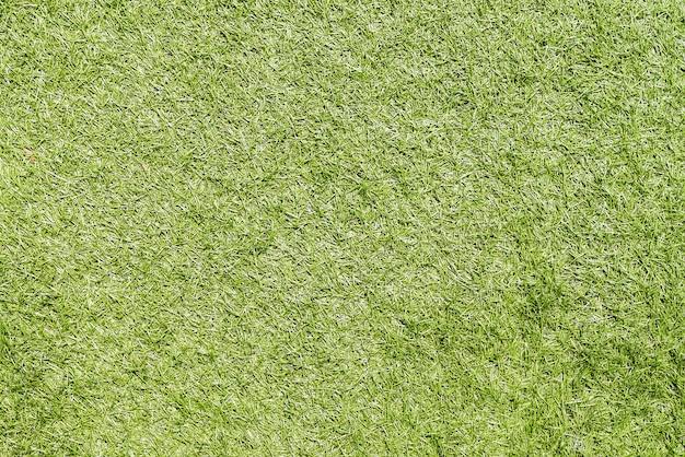 L'herbe verte Photo gratuit