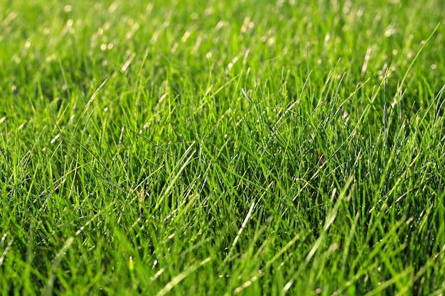L'herbe verte Photo Premium