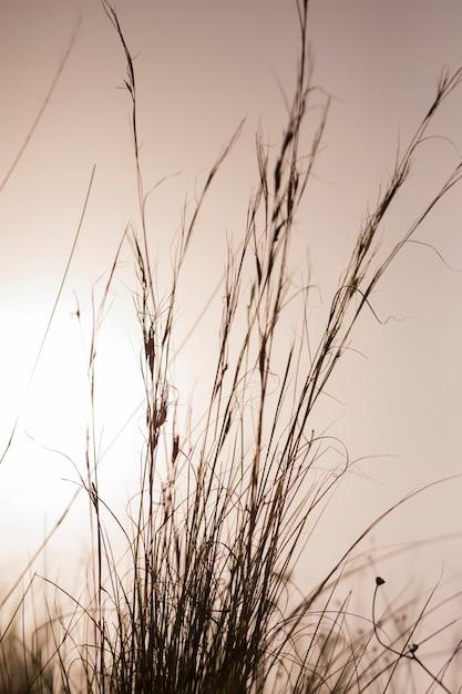Herbes hautes contre ciel dramatique Photo gratuit