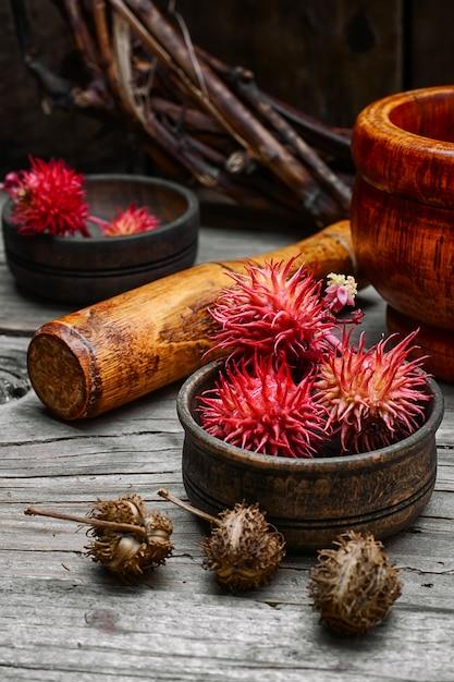 Herbes médecine alternative Photo Premium