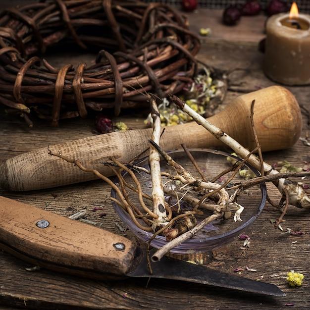 Herboriste de racine de réglisse médicinale séchée. Photo Premium