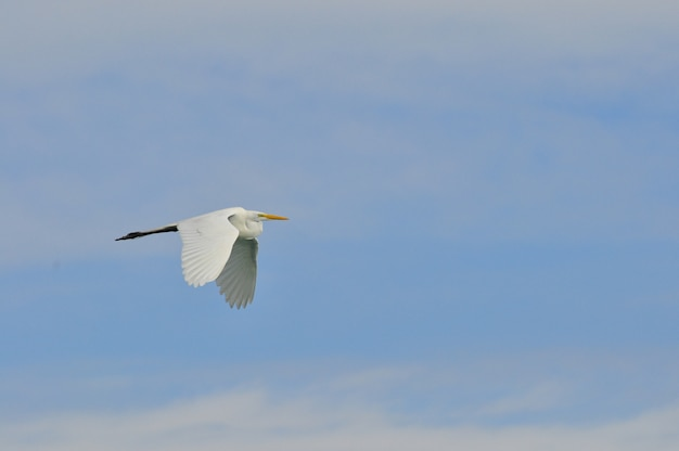Héron blanc volant Photo Premium