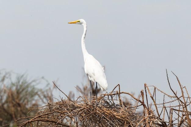 Le Héron Sur Le Nid Du Lac Baringo Au Kenya Photo Premium