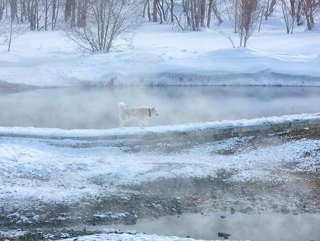 L'hiver minéral chaud au centre de loisirs du village de malki au kamchatka Photo Premium