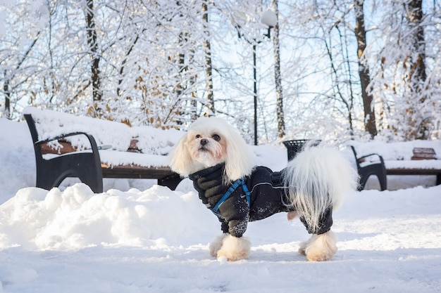 Hiver neige chien Photo Premium