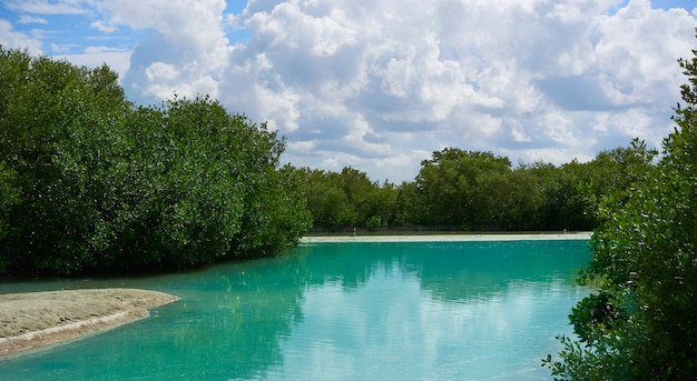 Holbox île tropicale à quintana roo au mexique Photo Premium