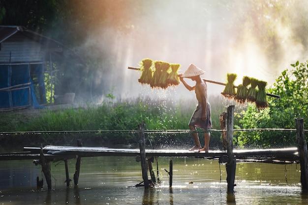 Homme agriculteur thai tenant riz bébé sur l'épaule marchant sur pont en bois plante terres agricoles asie Photo Premium
