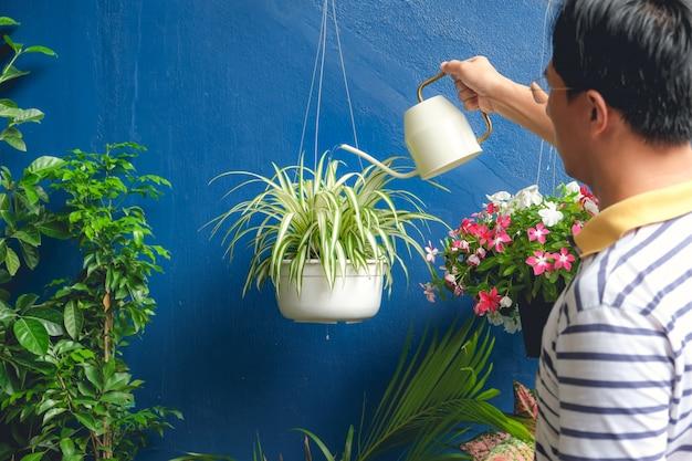 Homme Asiatique, Arroser La Plante à La Maison, Homme D'affaires En Prenant Soin De Chlorophytum Comosum (plante Araignée) En Pot Suspendu Blanc Photo Premium