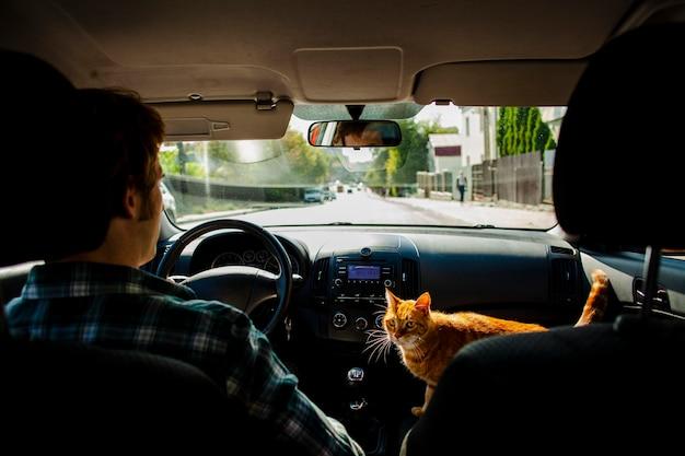Homme conduisant avec un beau chat à côté de lui Photo gratuit