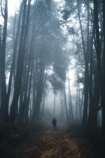 Homme Dans La Forêt Sombre, Brouillard Et Forêt De Pins Dans La Forêt Tropicale D'hiver, Brouillard Et Pin Photo Premium
