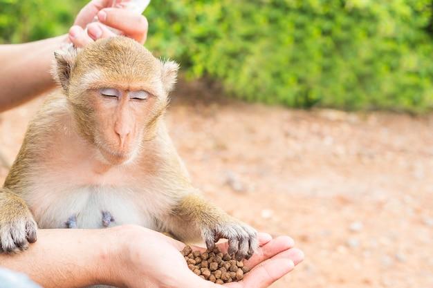 Un homme nourrissait les singes Photo gratuit