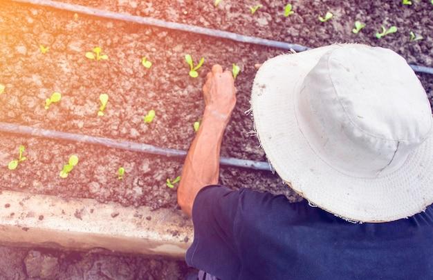 Homme, de, personne, tenue, abondance, sol, à, plant, plante, main, dans, jardinier Photo Premium