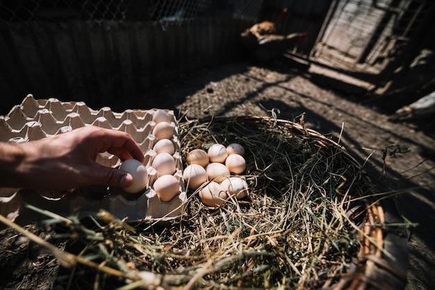 Homme plaçant des oeufs de ponte du nid dans le carton Photo gratuit
