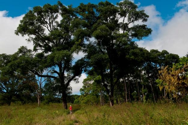 Homme, randonnée, dans, forêt, santa cruz, île, îles galapagos, équateur Photo Premium