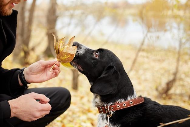 Homme se promène à l'automne avec chien automne parc automne Photo Premium