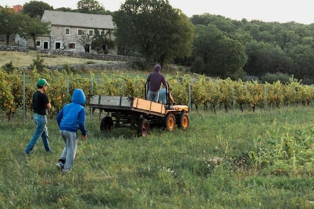 Hommes ramassant des raisins sur le terrain Photo gratuit