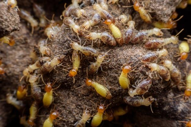 Hordes de termites construisant leur nid Photo Premium