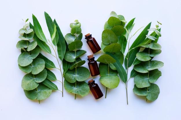 Huiles essentielles d'eucalyptus avec des branches d'eucalyptus Photo Premium