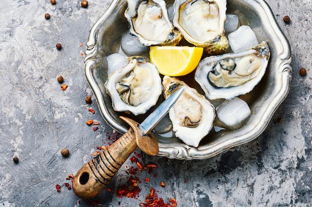 Huîtres Ouvertes Sur Plaque Métallique Photo Premium