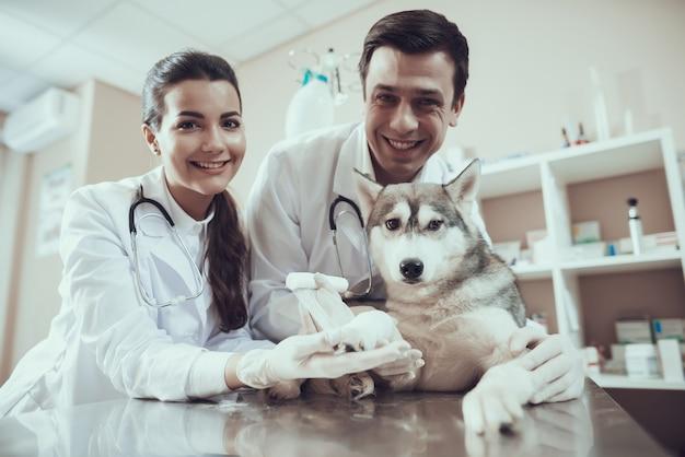Husky malade à la clinique vétérinaire bandage de la patte. Photo Premium