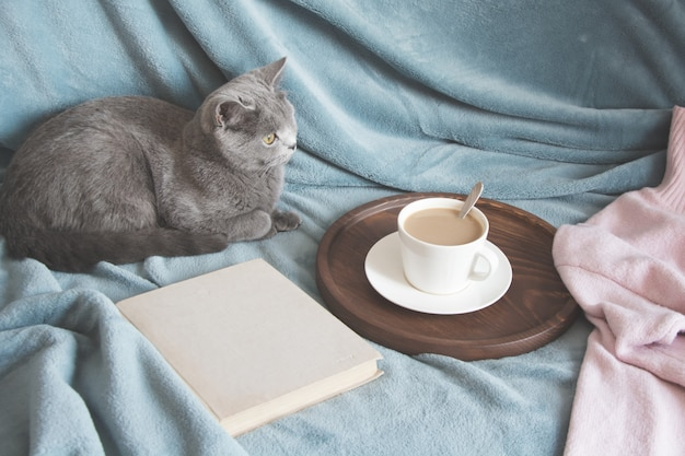 Hygge et concept confortable. chat mignon britannique reposant sur un canapé bleu confortable à l'intérieur de la maison du salon. Photo Premium