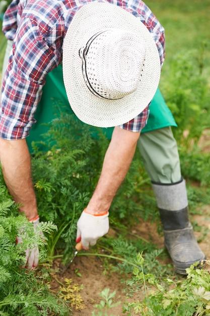 Il Veut Manger Frais Et écologiquement Photo gratuit