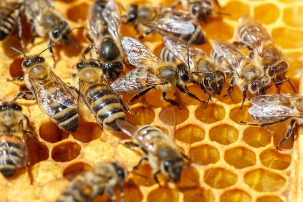Il y a beaucoup d'abeilles rayées qui s'assoient sur les nids d'abeilles Photo Premium