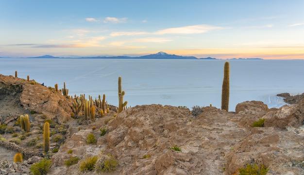 Île Incahuasi, Salar De Uyuni, Bolivie Photo Premium