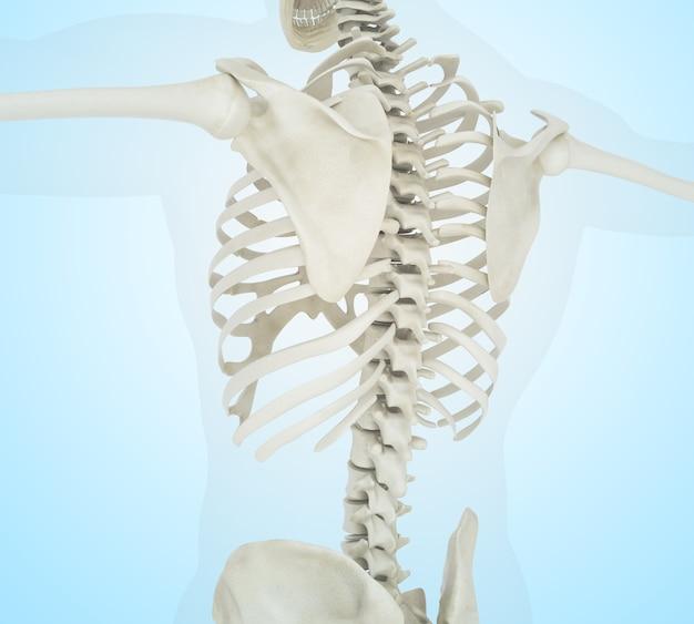 Illustration 3d de squelette humain retour Photo Premium