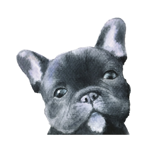 Illustration Aquarelle De Chien Bulldog Français Noir Photo Premium