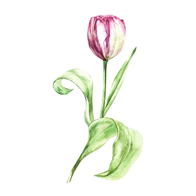 Illustration dans le style aquarelle d'une fleur de tulipes Photo Premium