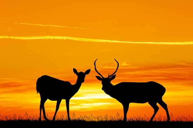 Illustration du cerf au coucher du soleil Photo Premium