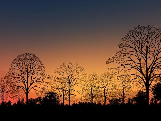 Image de beau paysage avec la silhouette des arbres au coucher du soleil Photo Premium
