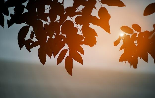 L'image de l'ombre n'est pas noir, se produit naturellement. Photo Premium