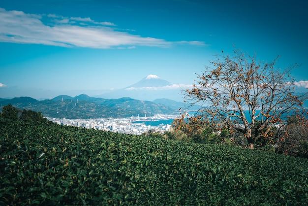 Image de paysage de montagne fuji avec champ de thé vert dans la journée à shizuoka, au japon. Photo Premium