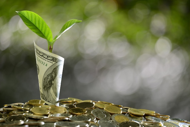 Image d'un tas de pièces de monnaie et d'un billet de banque roulé avec une plante au-dessus montrant les affaires Photo Premium