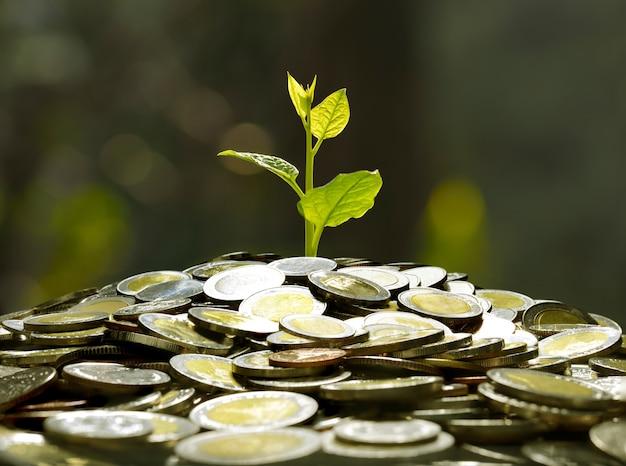 Image de tas de pièces de monnaie avec la plante sur le dessus pour les entreprises Photo Premium