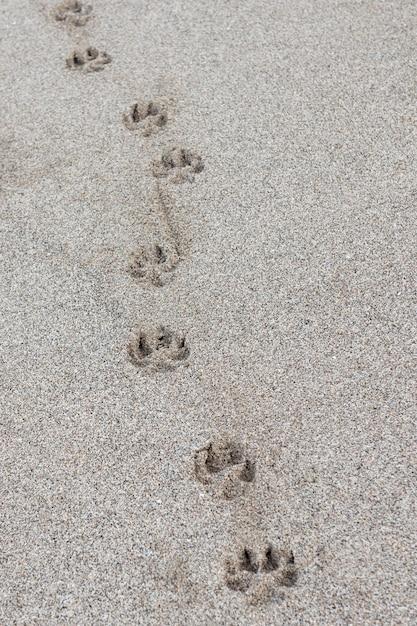 Impression de patte de chien unique dans le sable Photo Premium