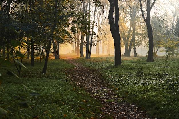 Incroyable Paysage D'automne Par Un Matin Brumeux Avec De Beaux Rayons De Soleil. Photo Premium