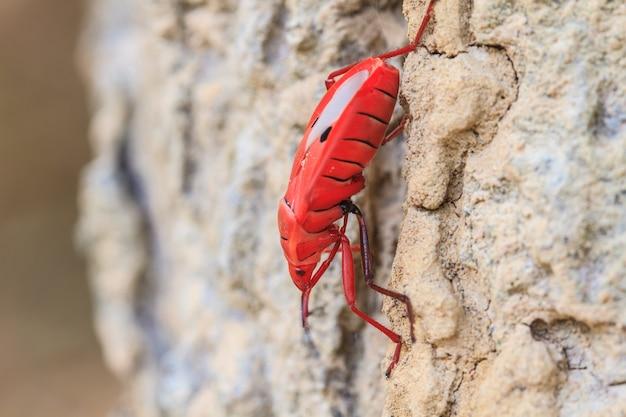 Insecte sur un arbre dans le genre sycanus Photo Premium