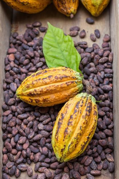 Installation De Fèves Et De Gousses De Cacao Mûres Sur Fond En Bois Rustique Photo Premium