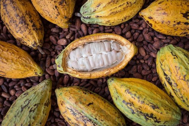 Installation de gousses et de fèves de cacao mûres sur fond en bois rustique Photo Premium