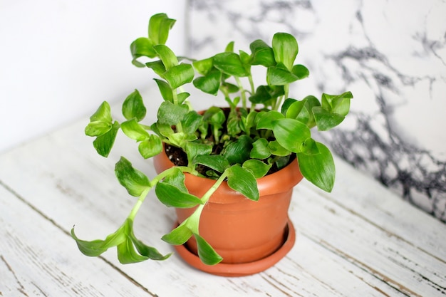 Intérieur de la plante d'intérieur Photo gratuit