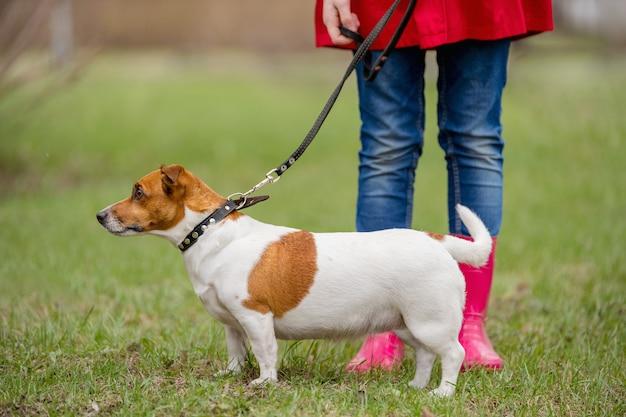 Jack russell chien et une fille en bottes rouges marchant dans le parc du printemps. Photo Premium