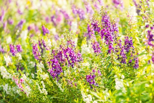 Jardin de fleurs de lavande Photo gratuit