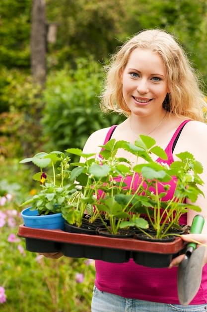 Jardin - planter des plants de fraises Photo Premium